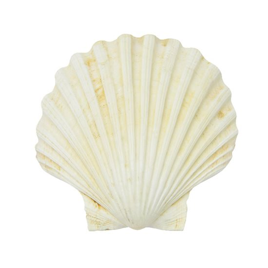 "Napron 45 x 30 cm ""Seashell""- Nuova R2S"